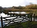 Marshy Ground - geograph.org.uk - 344374.jpg