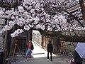 Marunouchi, Matsuyama, Ehime Prefecture 790-0008, Japan - panoramio (52).jpg