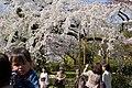 Maruyama Park (3516081616).jpg