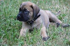 Musíte milovať psy datovania