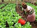 Maza Wanawake Kwanza Growers Association (7269688256).jpg
