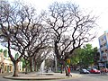 Mendoza, alameda (15450209661).jpg