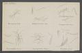 Meraporus - Print - Iconographia Zoologica - Special Collections University of Amsterdam - UBAINV0274 046 11 0014.tif