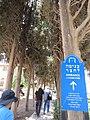 Merchavia Giant Courtyard, Merhavia, Jezreel Valley, Israel 01.jpg