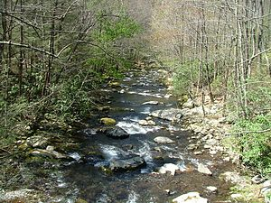 Little River (Tennessee) - Middle Prong near the confluence of Thunderhead and Lynn Prongs
