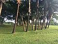 Millenium park - Abuja.jpg