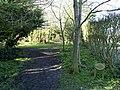 Millennium Avenue near Burton Pidsea - geograph.org.uk - 355707.jpg