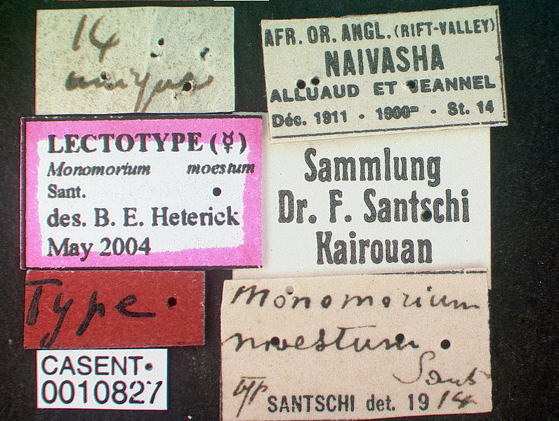 File:Monomorium hanneli casent0010827 label 1.jpg