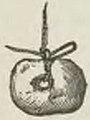 Montpetit - Poissons d'eau douce du Canada, 1897 (page 395 crop)c.jpg