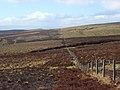 Moorland, Musgrave - geograph.org.uk - 1250270.jpg