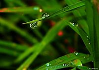 Morning dew drop.jpg