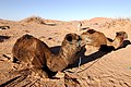 Morocco Africa Flickr Rosino December 2005 84037245.jpg