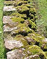 Mossy wall, Goodrich Castle stables area - geograph.org.uk - 472783.jpg