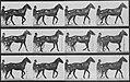 Muybridge, Eadweard - Reuben mit Sulky (0.32 Sekunden) (Zeno Fotografie).jpg