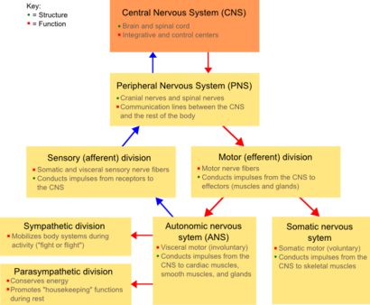 Classification of peripheral nerves wikipedia peripheral nervous system box diagram ccuart Gallery