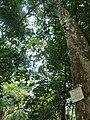 Nairobi Arboretum Park 24.JPG