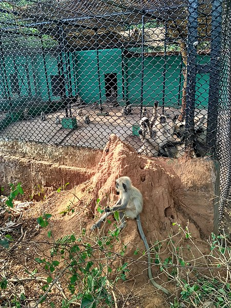 File:NandanKanan Monkeys.jpg