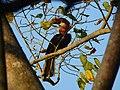 Narcondam Hornbill DSCN2147 16.jpg