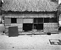 Native hut showing woman weaving inside, Rongerik Atoll, 1947 (DONALDSON 128).jpeg