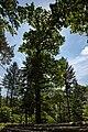Naturdenkmal Alte Eiche, Kennung 82350800006, Wildberg, von Westen 02.jpg