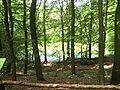 Nature reserve Meteoryt Morasko (1).jpg