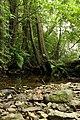 Nature reserve Niva Olšového potoka in summer 2014 (12).JPG