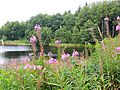 Naturschutzgebiet Stollberg.jpg