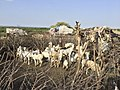 Near Hargeisa, Somaliland (30479750080).jpg