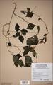 Neuchatel Herbarium Types NEU000113006.tif