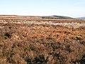 Newbiggin Fell (2) - geograph.org.uk - 700497.jpg