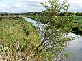 North Drain, Westhay Moor (geograph 2652297).jpg
