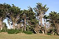 Notre Dame de Tronoen Bäume.jpg