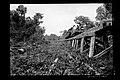 O Trem em Trecho da Ferrovia Madeira-Mamoré - 1106, Acervo do Museu Paulista da USP.jpg