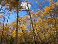 October 12 2005 Alpine Loop Utah United States 2.JPG