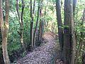 Okugame path.jpg