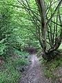 Old Track, Darwell Wood - geograph.org.uk - 1286193.jpg