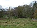 Old railway cutting - geograph.org.uk - 607818.jpg