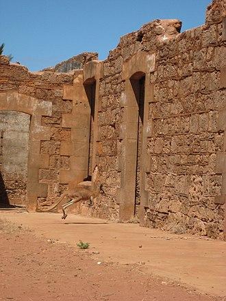 Onslow, Western Australia - A kangaroo in the ruins of Old Onslow