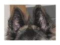 Oren hond.png