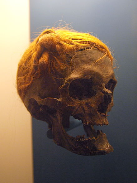 Osterby Head, a bog body with a Suebian knot Osterby Man.jpg