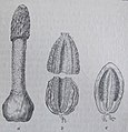 Ottův slovník naučný - obrázek č. 3112.JPG
