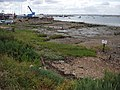 Oyster Beds - geograph.org.uk - 217475.jpg