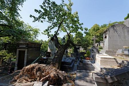 Père-Lachaise - Division 4 - arbre déraciné 06.jpg