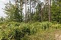 Pörtschach Bannwaldweg 8 Waldlichtung mit Farnkräutern 25082019 7073.jpg