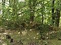Přírodní park Škvorecká obora-Králičina - lesy východně od sídliště Rohožník a severně od Květnické studánky (9).JPG