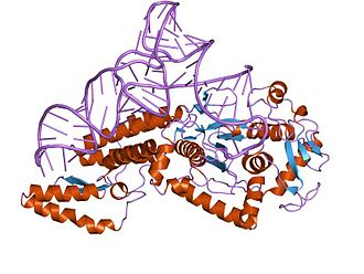 Aminoacyl tRNA synthetase - crystal structure of cysteinyl-tRNA synthetase binary complex with tRNACys
