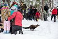 Pacific Fisher Release at Mount Rainier National Park (2016-12-17), 039.jpg