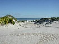 Padre Island National Seashore - sand dunes3.jpg