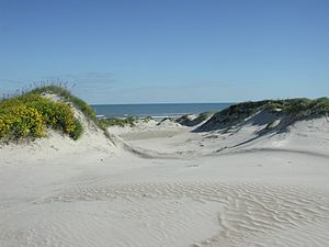 Sanddünen in der Padre Island National Seashore