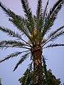 Palme 2.jpg
